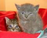 102415 Kittens
